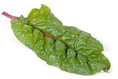 Single Green Leaf of Swiss Chard Spinach with Red Stem Stock Photos
