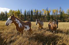 Horse at 83 Mile Creek, The Rocking Horse Ranch, 83 Mile House, Cariboo region, Stock Photos