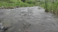 River Flowing Towards Camera with Green Weed and Rocks at Both Sides Stock Footage