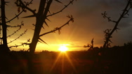 Magical timelapse sunset through thorn branches over countryside Stock Footage