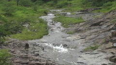 River Flows in Long Way Over Rocks Between Mountain Forest Scenery Stock Footage