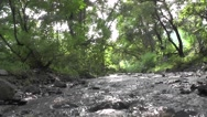 River Flows in Forest with Big Trees and Rocks Nature Scenery Stock Footage