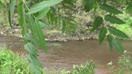 River Flows in Rain Forest with Clear Water Beautiful Nature Footage Stock Footage
