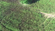 Alone tree in the fields Stock Footage