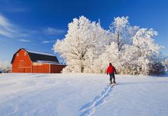 A man snowshoes towards a red barn, near Beausejour, Manitoba, Canada Stock Photos