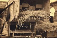 Threshing Machine in operation Stock Footage