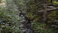 The mountain river in forest Stock Footage