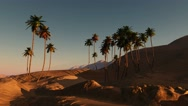 Palms in desert at sunset Stock Footage