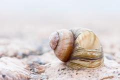 Abstruct detailed photo image of old damaged spiral snail shell Stock Photos