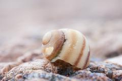 Abstruct detailed photo of old damaged spiral snail shell Stock Photos