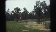 1974: giraffes in resort LYNBROOK, NEW YORK Stock Footage