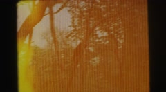1974: the forest and the small water region LYNBROOK, NEW YORK Stock Footage