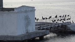 Birds gulls and cormorants sitting on concrete pier on sea Stock Footage