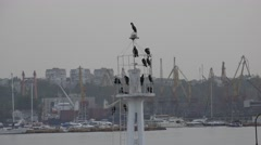 Birds gulls and cormorants sit on an iron pole lighthouse sea Stock Footage
