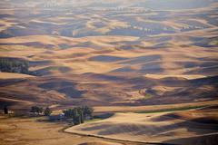 Fields in late summer in the Palouse region of eastern Washington State, USA. Stock Photos