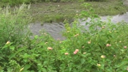 Beautiful River Flowing with Amazing Sound with Clear Water, Flower Plants Stock Footage
