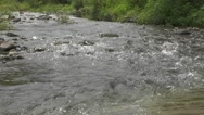 Long River Flows in Curve in Forest Nature Scene Stock Footage