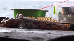 Hand takes marine fish bull with metal table Stock Footage