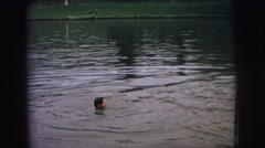 1974: young boy swimming in lake goes under water and holds his breath  Stock Footage