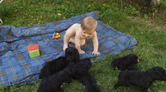 Baby boy playing with puppies outdoors. Stock Footage