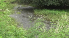 River Flows in Beautiful Rain Forest with Great Sound Nature Scenery Footage Stock Footage