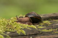 Snail crawling along a log, Englishman River Falls Provincial Park, Vancouver Stock Photos