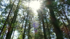 Panning through a forest canopy Stock Footage