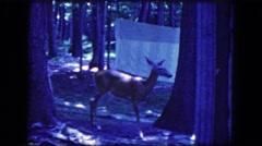 1964: curious deer at the camp ground NIAGRA FALLS, NEW YORK Stock Footage