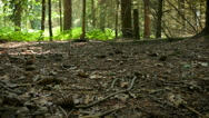 Panning across a forest floor Stock Footage