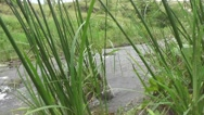 River Looking Through Grass Stock Footage
