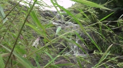 Amazing Waterfall Looking Through Long Grass Stalks Nature Scenery Stock Footage