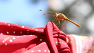 Dragonfly sitting on a rope Stock Footage