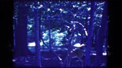1964: a young doe in the forest campground watches us NIAGRA FALLS, NEW YORK Stock Footage