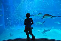 Teenager gazing as sea life in front of the 9-meter deep tank at Osaka Aquarium Stock Photos