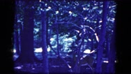 1964: the deer in the forest NIAGRA FALLS, NEW YORK Stock Footage