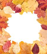Square picture frame from fallen autumn leave Stock Photos