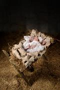Baby Jesus on a Manger Stock Photos