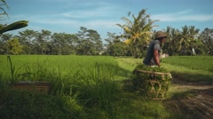 Old indonesian man sitting on плетеные корзины with grass Stock Footage