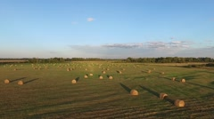 The field with hay and birds, aerial Stock Footage