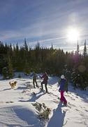 A group of snowshoers with their dog make their way along a ridge on Greenstone Stock Photos