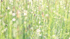 Dew on horsetail Stock Footage