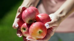 Five apples in female hands. Apple orchard. Summer garden. Harvesting Stock Footage
