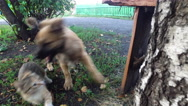 Dog attacks the cat. The dog wants to bite the cat. Stock Footage