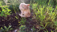 Cat resting. Cat sits on the ground and cleans its fur. Stock Footage