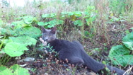 Cat resting. Cat lying on the ground and in the grass. Stock Footage