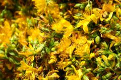 Flowers Hypericum Stock Photos