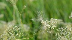 Grass in meadow close-up, Russia Stock Footage