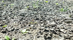 Dried and cracked crop floor Stock Footage