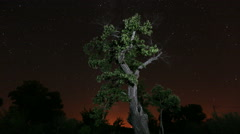 Tree Timelapse with Space Stars Stock Footage