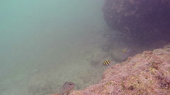 Rock ledge and reef fish Stock Footage
